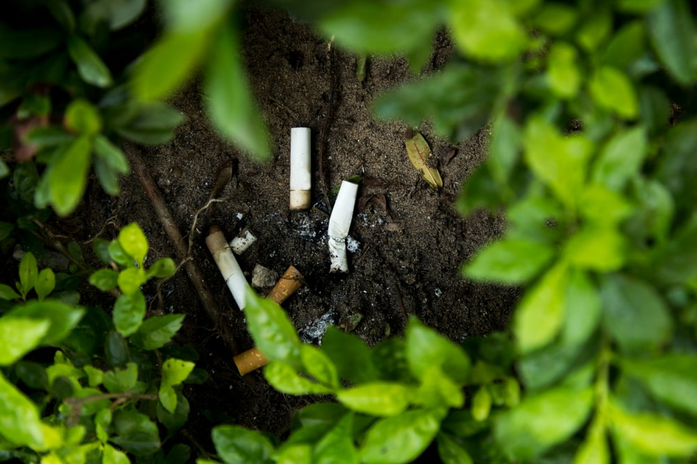 The cigarette is in the bush image