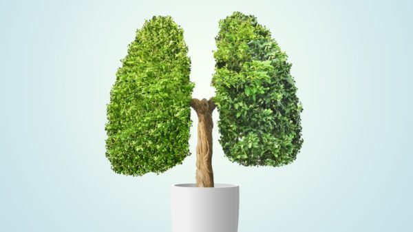 Lung Cleanse: How to Restore Your Lungs Once You Quit Smoking